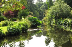 Killinskey River in Mount Usher  gardens